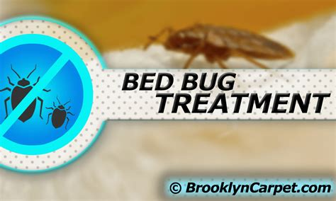 bed bug odor pet stain and pet odor cleaning brooklyn