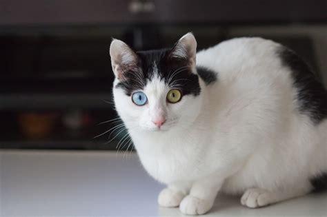 Cha T conseils pour chat