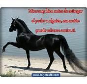 Imagenes Caballos Con Frases  Apexwallpaperscom