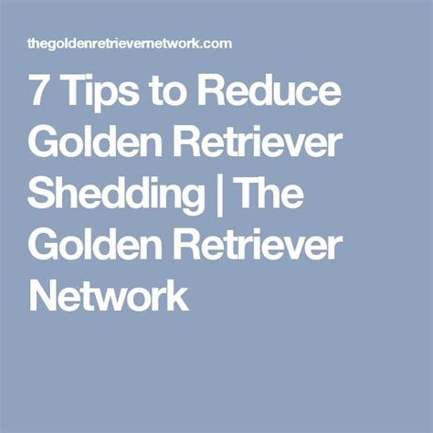 how to reduce golden retriever shedding 7 tips to reduce golden retriever shedding the golden retriever network awwww