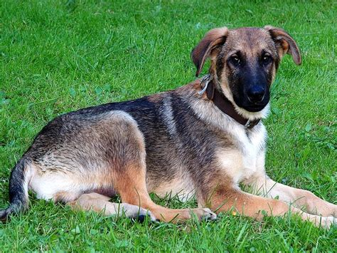 mixed breeds mixed breed animals