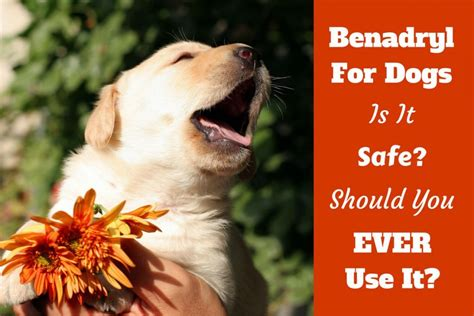 can dogs benadryl benadryl for dogs can you give it is it safe what dosage