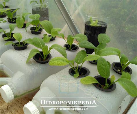 cara membuat nutrisi hidroponik untuk sayuran cara ini membuat hidroponik anda lebih hemat hidroponik shop