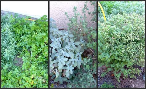 a feast for the black friday at home thanksgiving - Winter Herb Garden