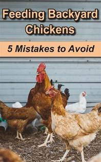 Backyard Chickens Feeding Feeding Backyard Chickens 5 Common Mistakes To Avoid