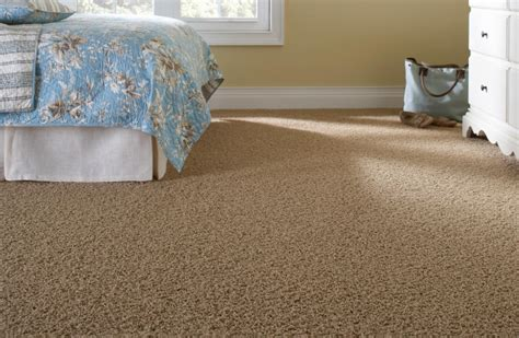 martha stewart living premium plus carpet collections at