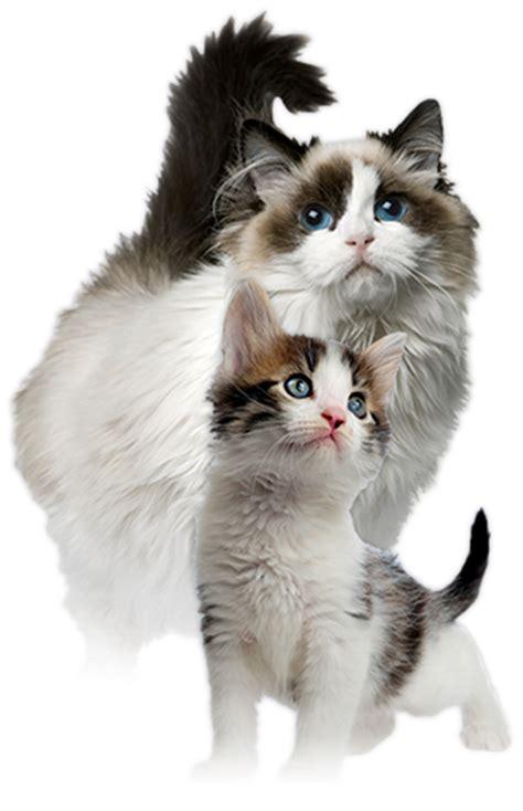 Nutri Source Cat Kitten Salmon 1 cat food nutrisource cat and kitten chicken salmon liver