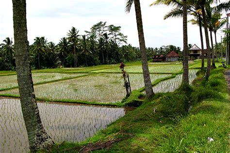 Ogek Home Stay Bali Indonesia Asia bali ubud rice paddies virtourist bali
