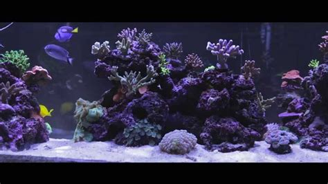 watch online fish tank 2009 full hd movie official trailer aquarium video in widescreen fish tank in full hd youtube