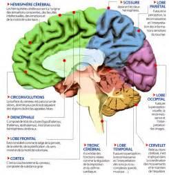 ii les effets sur le cerveau