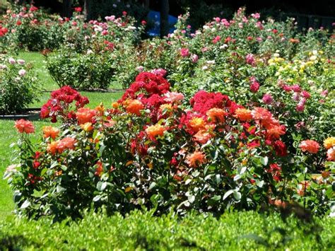 aiuole giardino aiuole giardino tipi di giardini consigli per le