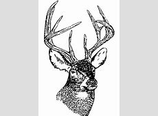 Clipart - Whitetail Deer Head - ClipArt Best - ClipArt Best Whitetail Buck Drawings