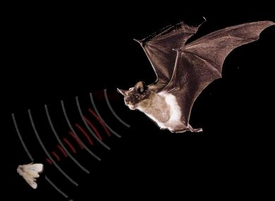interesting facts about bats just fun facts