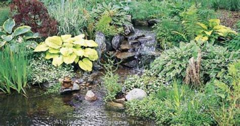 aquascape ecosystem plants around ponds the aquascape ecosystem plants for