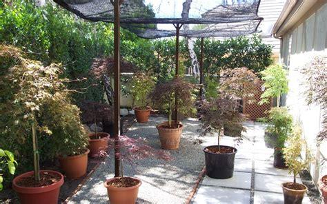 Japanese Container Garden - japanese maple container garden gardenality