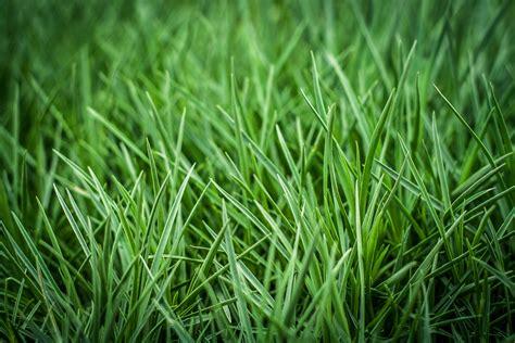 Green Grass by Green Grass