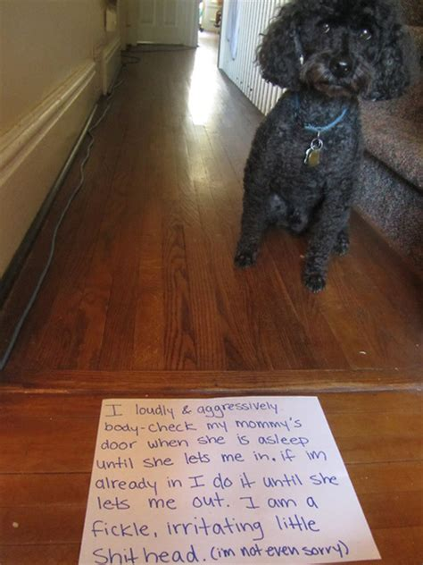 Dog Shaming Meme - dog shaming man s best friend acts a fool 27 pics