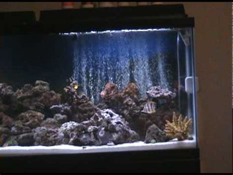 led light for 55 gallon aquarium part 1 my 55 gallon marine salt water aquarium coral reef