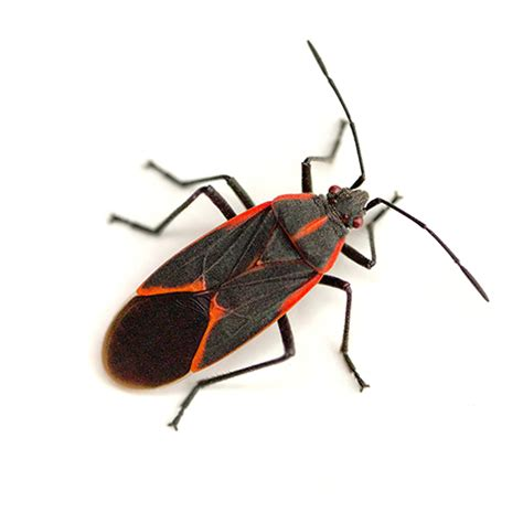 common backyard bugs insect identifier