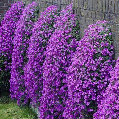fiori da bordura pieno sole florovivaisti bergamaschi