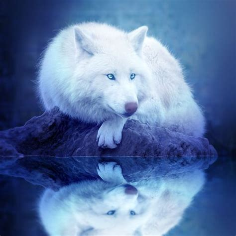 google images wolf white wolves with bright blue eyes google search white