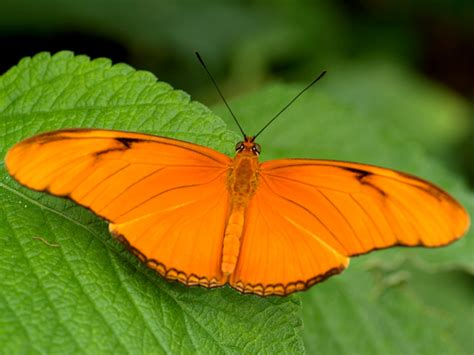 colorful butterfly amazing pictures seeneries wallpapers sceneries
