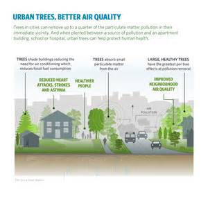 best plants for apartment air quality urban trees can save lives by reducing air pollution and temperature actrees
