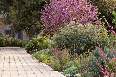 permeable driveway  mixed border  trees shrubs
