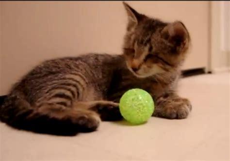 Mainan Kucing Bola Pyramid mainan bola kucing mainan oliv