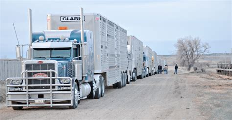 beef producers applaud 90 day waiver of eld trucking rule beef magazine