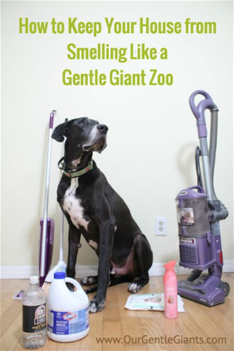how to keep your house from smelling like a dog how to keep your house from smelling like 28 images 5 ways to keep your house from