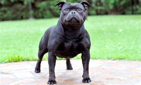 dogs that can be left alone 15 breeds that can be left alone barking royalty