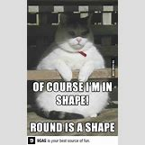 Funny Animal Workout Meme   402 x 644 jpeg 39kB