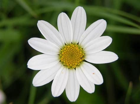 i fiore fiori piante e giardini mondo marzo 2012