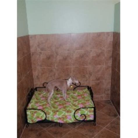 lush puppy lush puppy pet resort jupiter florida 33458