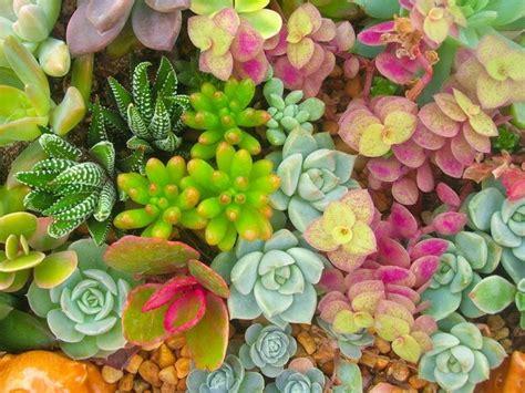 come curare le piante da appartamento come curare le piante grasse piante appartamento come