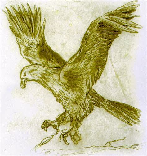 american eagle tattoo designs environmental economics eagle tattoos eagle