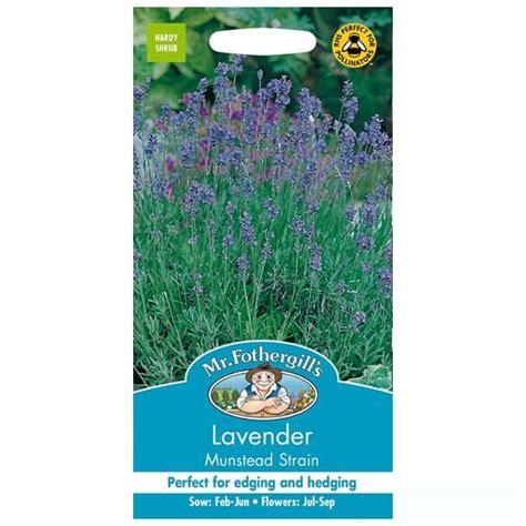 Bibit Bunga Lavender Bandung jual benih lavender munstead strain 150 biji mr