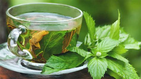 Herbal Tea herbal tea in pregnancy is it safe