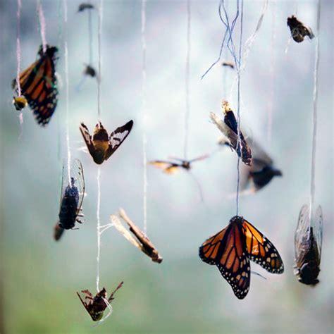 photo du jour: natural specimens represent the myriad