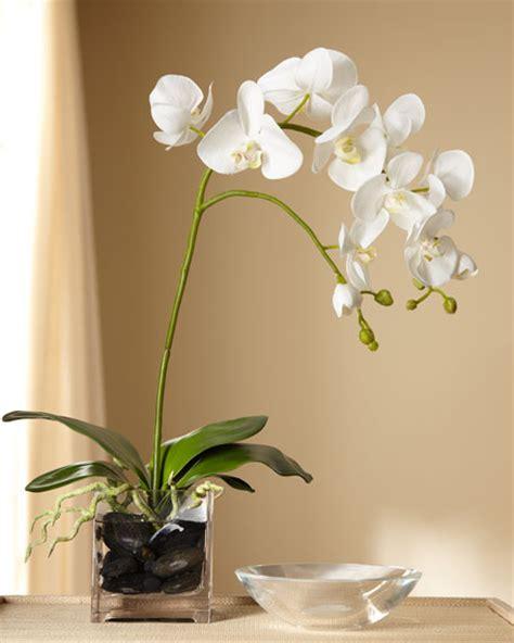 decorative vase vases flower vase flowers orchid white white orchid in clear vase