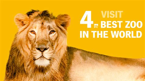 which is the best in the world prague zoo is the fourth best zoo in the world