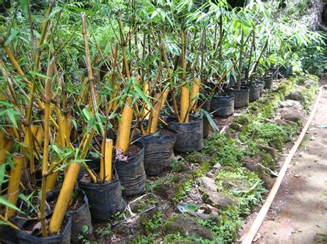 17 best images about propagation on pinterest bamboo seeds shrubs and leaves