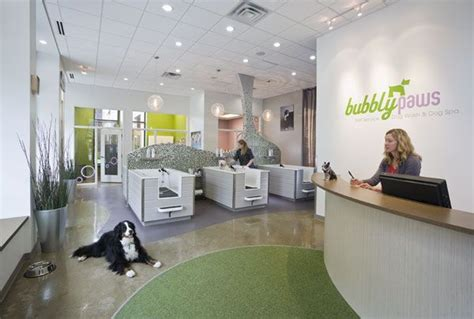 puppy salon 25 best ideas about spa on rooms pools and pet daycare