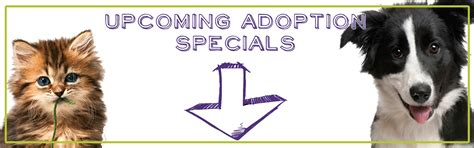 adopt a animal shelter dogs for adoption www imgkid the image kid has it