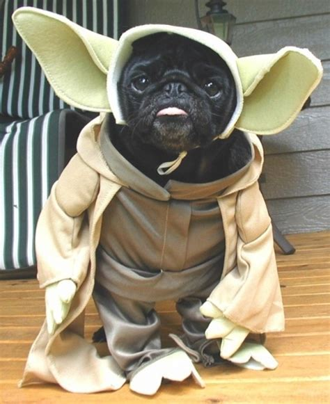 pug in yoda costume 22 wars costumes that you need rn