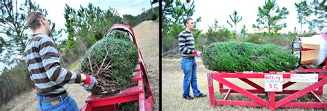 christmas tree farms pensacola tree forest in pensacola florida domestic