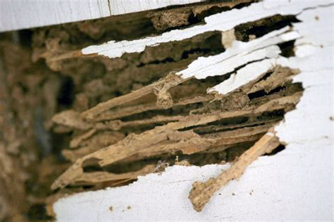 should i buy a house with termite damage should you buy a house with termites 28 images how often should i get a termite