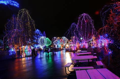 columbus zoo lights columbus zoo wildlights 7 by cdubya1971