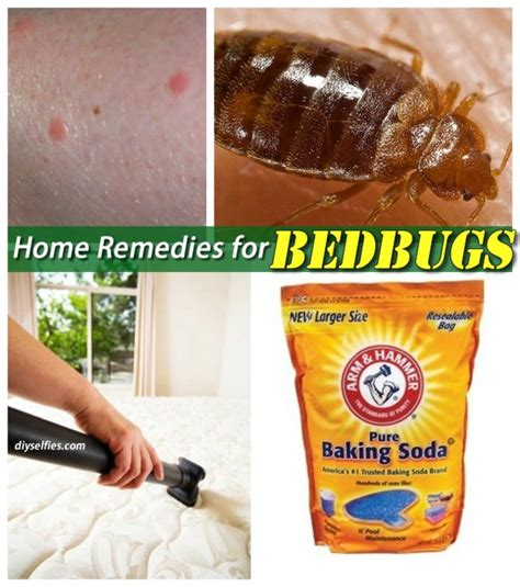 gorgeous home remedies for bed bugs on home remedies to